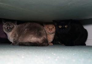 Przestraszone koty