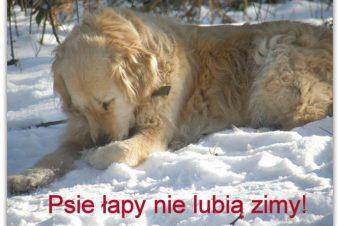 Psie łapy nie lubią solonej zimy!